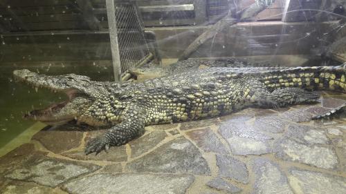 Výlet na Krokodýlí farmu v Protivíně